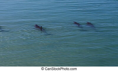 Dolphins underwater shot - A birds eye view shot of dolphins...