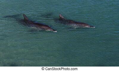 Dolphins underwater shot