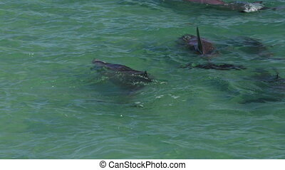 Dolphins underwater shot - A medium shot of a dolphins...