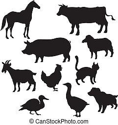 doméstico, siluetas, animales