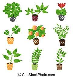 domů, houseplants, a, květiny, do, hrnec, barvitý, ikona, eps10