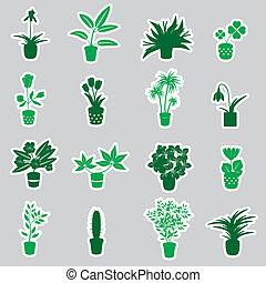domů, houseplants, a, květiny, do, hrnec, prasečkář, eps10