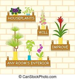 domů, květiny, do, zasadit