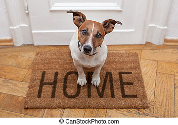 domů, přivítání, pes