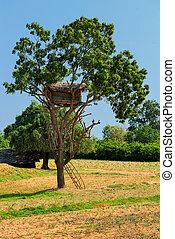 dom, drzewo