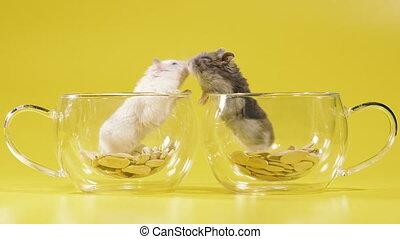dom, filiżanka, dwa, chomiki, ustalać, coffee., rodents., ...