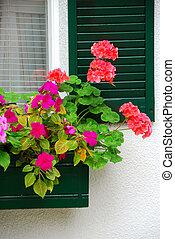 dom, kwiat boks