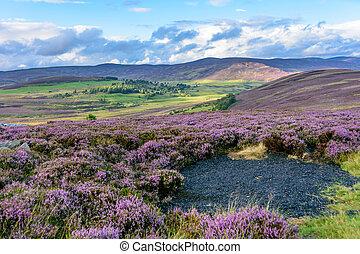 dombok, gördülő, szelíden, hanga, északi, skócia