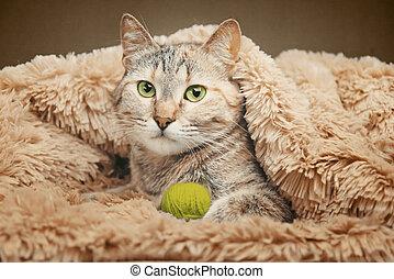 Domesti? cat lying with ball of thread on soft plaid.