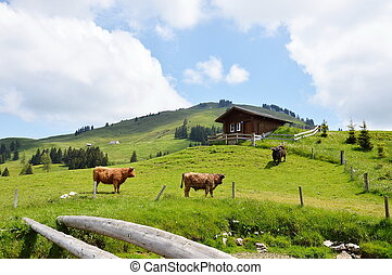 domestic animal on Appenzell