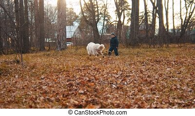 Domestic beautiful dog playing with little boy in autumn park