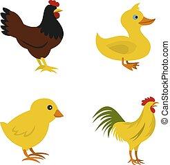 Domestic bird icon set, flat style