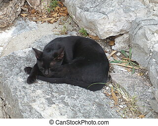 Domestic black cat is sleeping on the stone wall