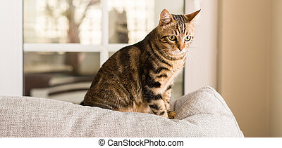 Domestic cat at home