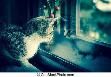 domestic cat behind window