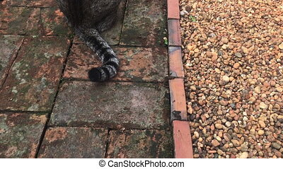 Domestic cat chilled in home garden, stock footage