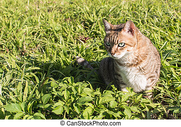 domestic cat in outdoor