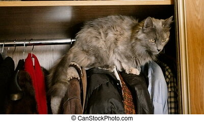 Domestic cat is hiding in a wardrobe over the wears....