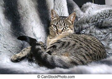cat lying on fur blanket