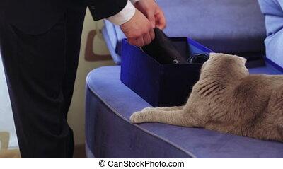Domestic cat on sofa