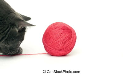 domestic cat playing with ball over white background -...