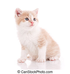 Domestic cat portrait on a white background.