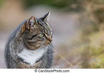 domestic cat roaming outdoors