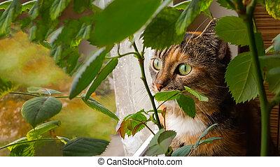 Domestic cat sits on the windowsill