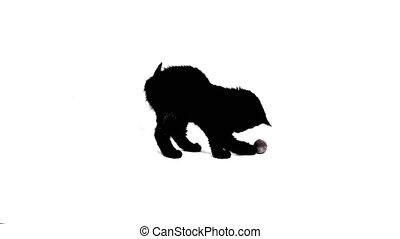 Domestic Cat - Animal Themes