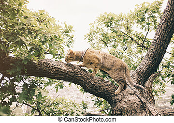 Domestic cat walking on tree outdoor.