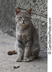 Domestic cat with a caught mouse.