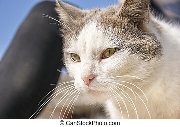 Domestic cat with nice yellow eyes - Portrait of beautiful...