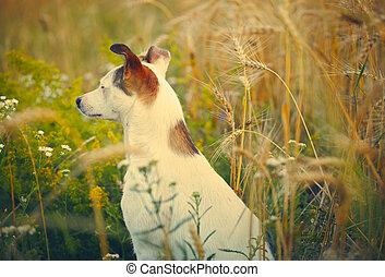 Domestic dog in a field