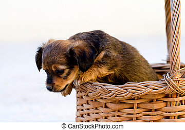 domestic dog jumps out of basket