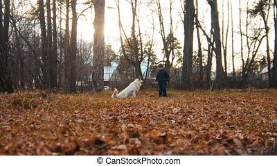 Domestic dog playing with little boy in autumn park