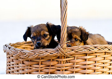 domestic dogs on the basket
