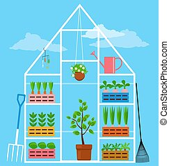 Domestic garden greenhouse - Greenhouse with seedling of ...