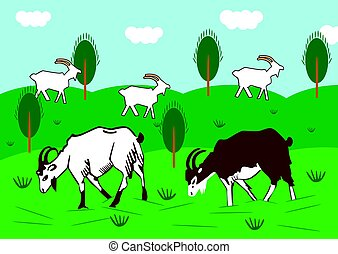 Domestic goats graze in a meadow in summer - Domestic goats...