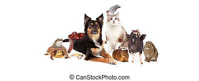 Domestic Pet Group Sized fo Social Media - A large group of...