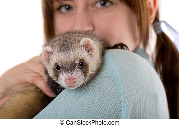 on a shoulder of the mistress - domestic polecat on a...