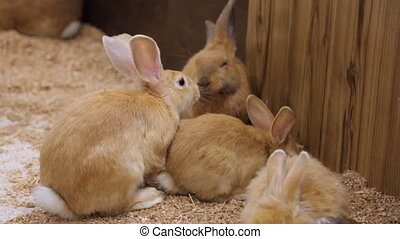 Domestic rabbits in zoo yard
