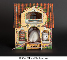 rat in the dollhouse