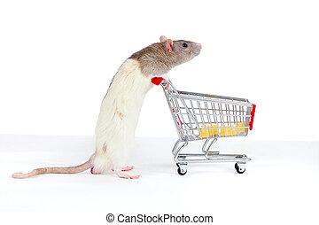 domestic rat pushes shopping cart