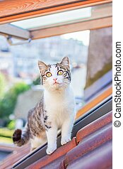 Domestic white and gray cat standing on the tiled roof. Cat looking up