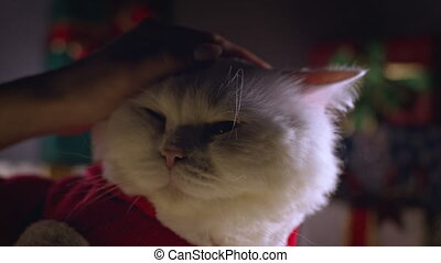 Domestic white cat posing in Santa costume, enjoys being stroked on gift boxes decoration background. New year, pets, animals meme concept. High quality 4k footage