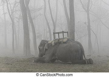 Domesticated elephant lying down, foggy morning in Chitwan,...