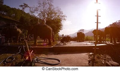 Domesticated Elephants at a Tour Company in Vietnam - Six ...