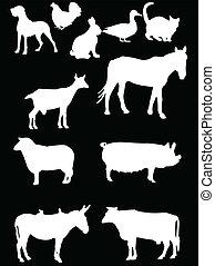 domestics animal 2 - vector