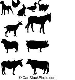 domestics animal - vector