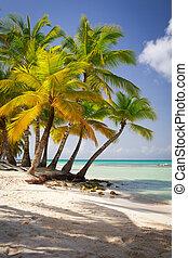 dominicano